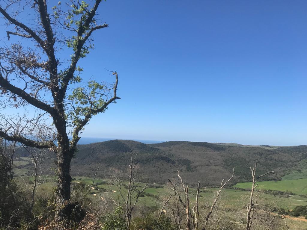 Panorama da Monte Cavone